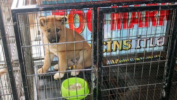 Продажа собак в Баку - Sputnik Азербайджан