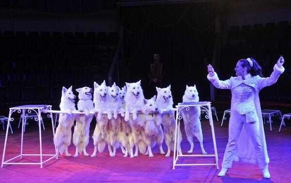 Рафаэла Хонден: Лично мои животные счастливы, работают с радостью, для них это как игра - Sputnik Азербайджан