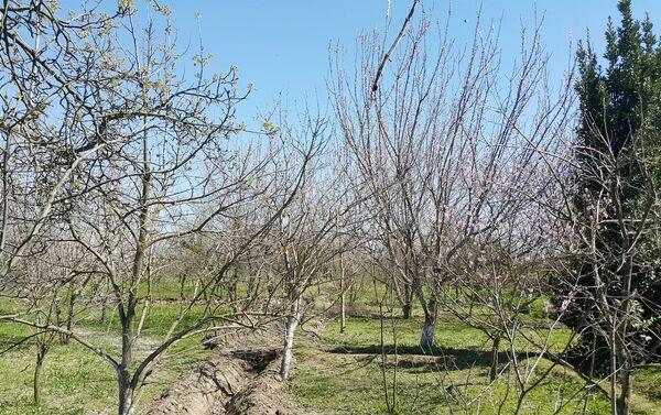 У семьи Авдеенко два гектара земли, розданной колхозом - Sputnik Азербайджан