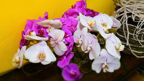 Орхидеи - самые красивые цветы - Sputnik Azərbaycan