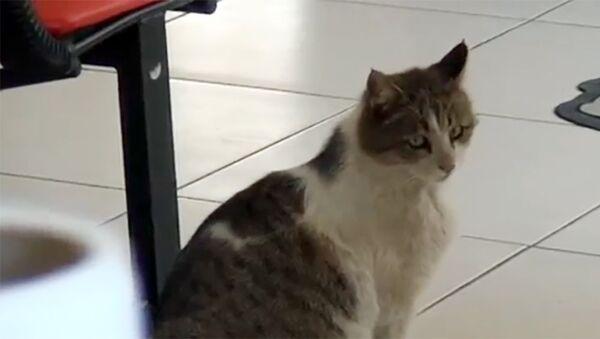 Беременная кошка пришла в центр семейного здоровья - Sputnik Азербайджан
