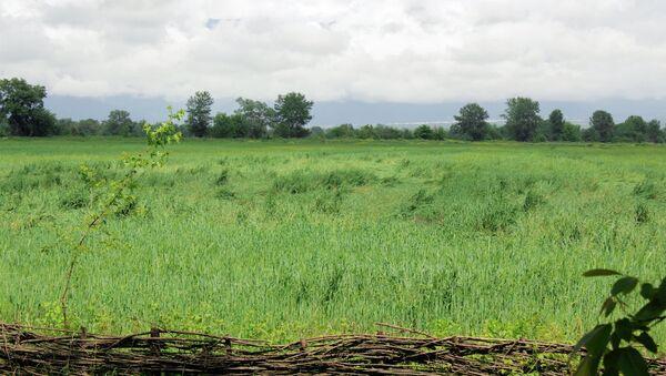 Земли сельскохозяйственного назначния - Sputnik Азербайджан