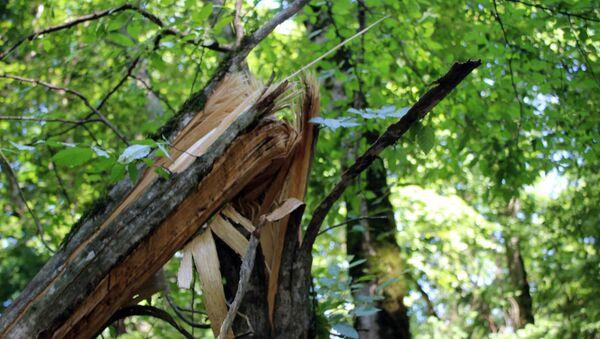 Поврежденные деревья в лесу, архивное фото - Sputnik Азербайджан