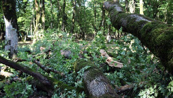 Şimal-qərb bölgəsində müşahidə olunan güclü yağış və külək iri ağacların gövdəsini yarıdan qoparıb - Sputnik Azərbaycan