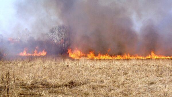 Пожар в поле. Архивное фото - Sputnik Азербайджан
