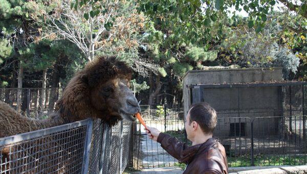 Вольер с верблюдом в Бакинском зоопарке - Sputnik Азербайджан