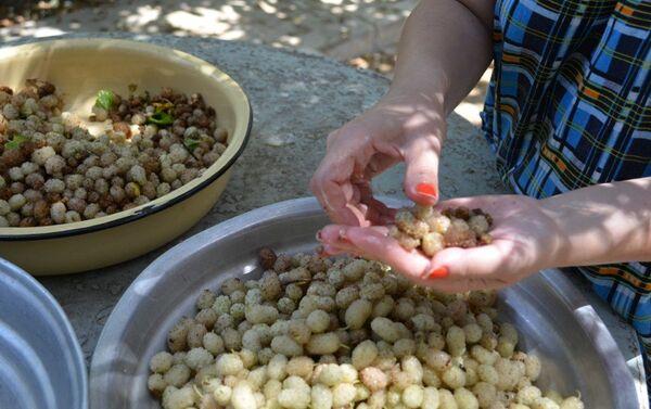 Приготовить тутовый плов можно лишь в недолгий период с конца мая и в течение июня, когда плодоносят тутовые деревья - Sputnik Азербайджан