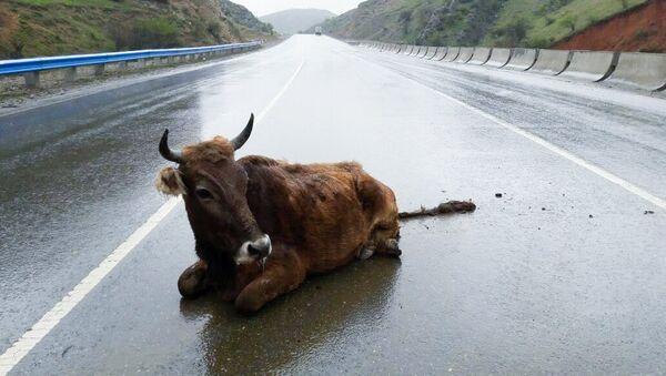 Корова на дороге. Архивное фото - Sputnik Азербайджан