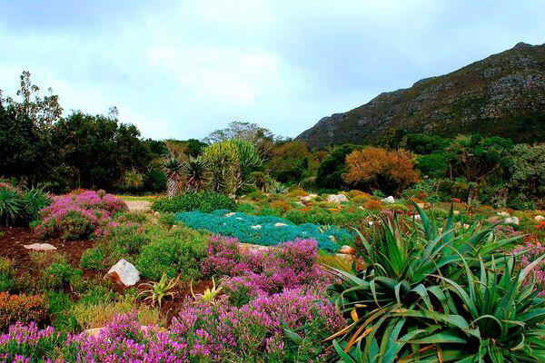 Кирстенбош – ботанический сад, расположенный неподалеку от Кейптауна у подножия Столовой горы. Здесь насчитывается более 7000 видов растений, в том числе много редких и исчезающих видов - Sputnik Азербайджан