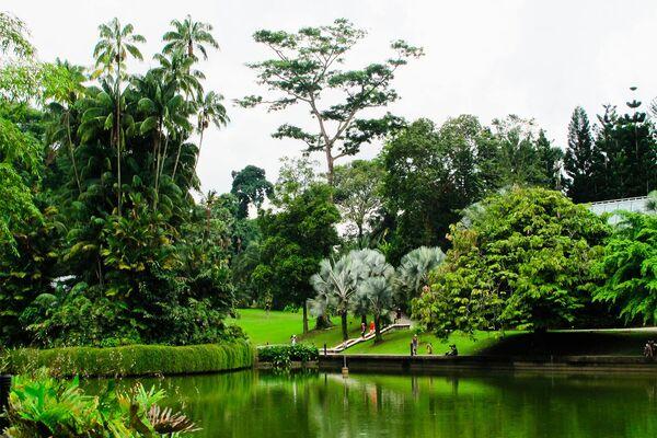 Сингапурский ботанический сад. Площадь сада равна 74 гектарам - Sputnik Азербайджан