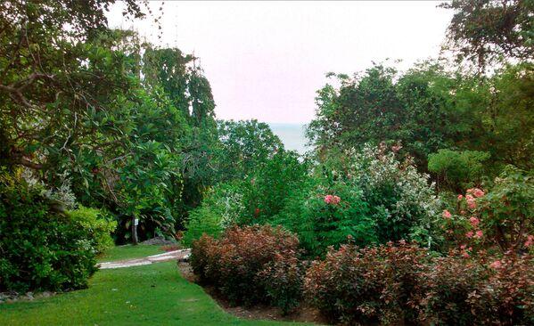 Ботанический сад Андромеды, занимающий 2,4 гектара, находится в небольшой рыбацкой деревне под названием Вирсавия (Сент-Джозеф, Барбадос) - Sputnik Азербайджан