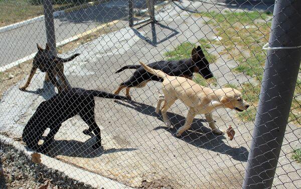 В настоящее время в Кинологическом батальоне 45 служебных собак - Sputnik Азербайджан