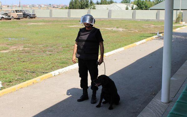 Сейчас в батальоне проходит обучение новая собака - Sputnik Азербайджан