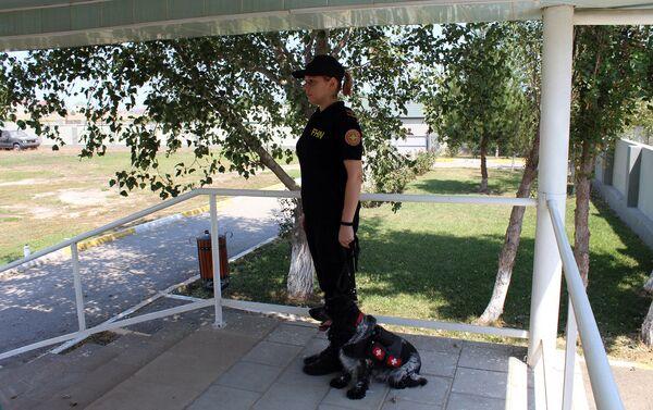 Собакой-санитаром, которая несет лекарства и воду пострадавшим - Sputnik Азербайджан