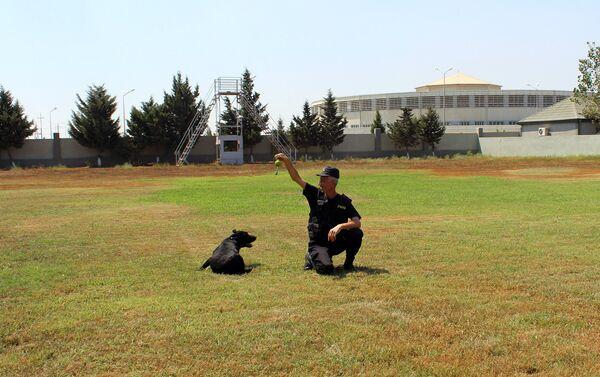 При приеме на работу здесь учитывается отношение к собакам, без заботы, любви, животное невозможно обучить - Sputnik Азербайджан