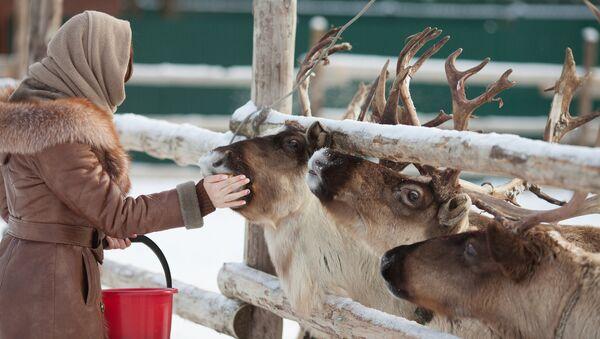 Фермерское хозяйство Северный олень в Московской области - Sputnik Азербайджан