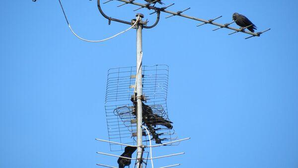 Антенна аналогового телевещания - Sputnik Азербайджан