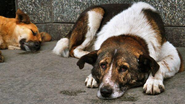 Бродячие собаки - Sputnik Азербайджан