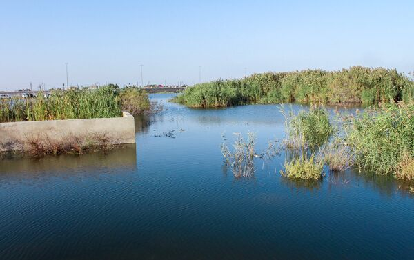 Заросшее камышами, озеро в Кюрдаханах - рассадник комаров - Sputnik Азербайджан