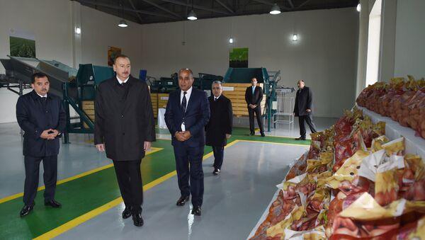 Ильхам Алиев принял участие в презентации сельского фермерского хозяйства Биринджи Шихлы - Sputnik Азербайджан