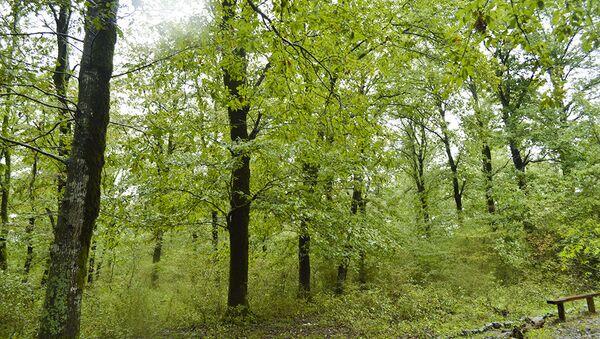Деревья в Гирканском национальном парке - Sputnik Азербайджан