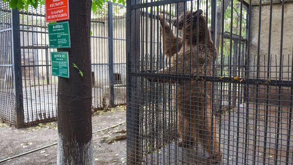 Бакинский зоологический парк - Sputnik Азербайджан