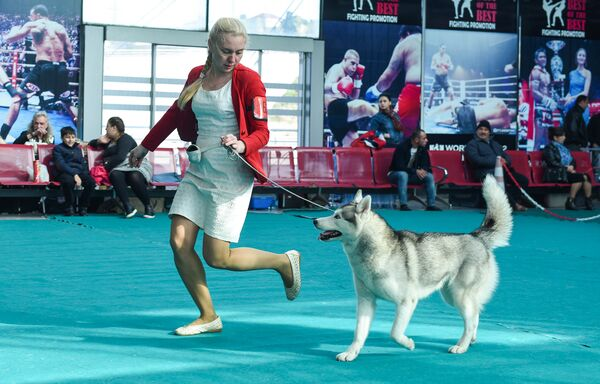 Международная выставка собак CASPIAN SEA WINNER-2016 в Баку - Sputnik Азербайджан
