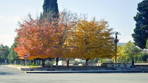 Железное дерево - Sputnik Азербайджан