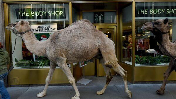 Верблюды в Нью-Йорке - Sputnik Azərbaycan