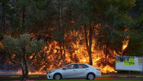 Природные пожары в Израиле - Sputnik Азербайджан