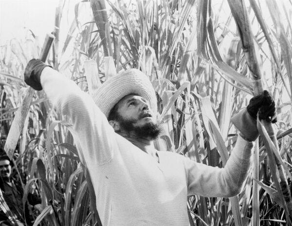Фидель Кастро на тростниковой плантации - Sputnik Азербайджан