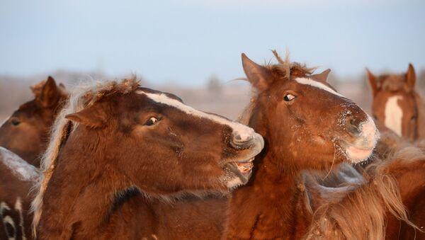 Табун лошадей, фото из архива - Sputnik Азербайджан