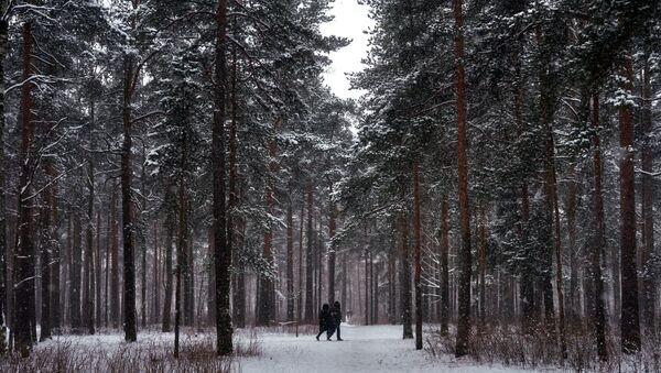 Парк Сосновка в Санкт-Петербурге, фото из архива - Sputnik Азербайджан