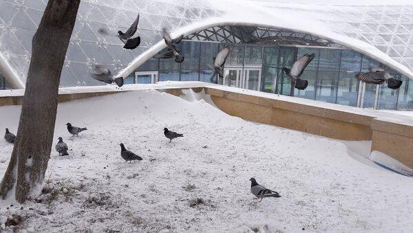 Снег в Баку — кому в радость, а кому в тягость - Sputnik Азербайджан