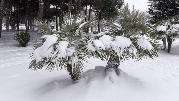 Пальмы под снегом, архивное фото - Sputnik Азербайджан