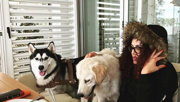 Собаки, архивное фото - Sputnik Азербайджан