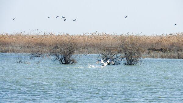 Ağ göl milli parkı - Sputnik Azərbaycan