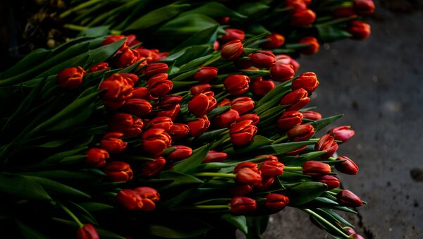 Тюльпаны, фото из архива - Sputnik Азербайджан