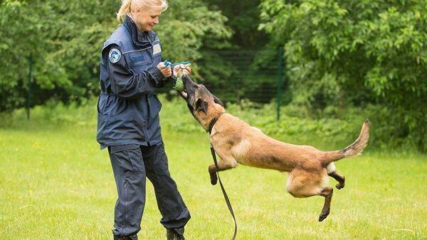 Тренировка полицейской собаки - Sputnik Азербайджан