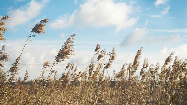 Ветер на поле - Sputnik Азербайджан