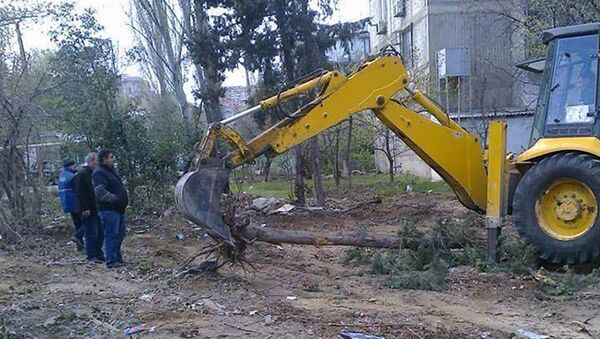 Массовая вырубка деревьев - Sputnik Азербайджан