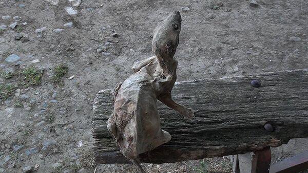 В Азербайджане найдена мумия невиданного зверя - Sputnik Азербайджан