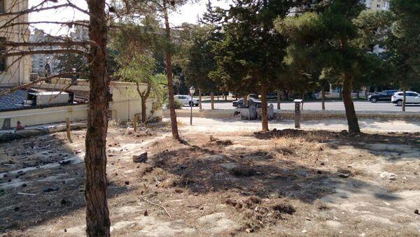 В Баку выявлен факт незаконной массовой вырубки деревьев - Sputnik Азербайджан