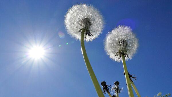 Солнечный летний день - Sputnik Азербайджан