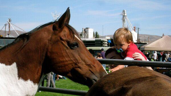 Лошадь, фото из архива - Sputnik Азербайджан