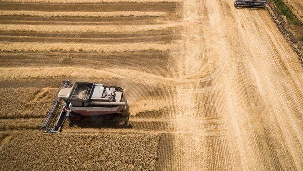 Уборка пшеницы на полях, фото из архива - Sputnik Азербайджан
