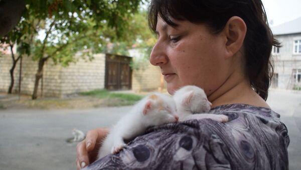 Кошкин дом или мама-кошек из Мингячевира - Sputnik Азербайджан