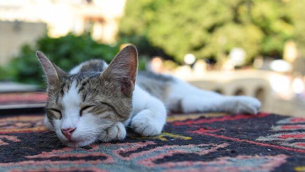 Спящий кот в Баку - Sputnik Azərbaycan