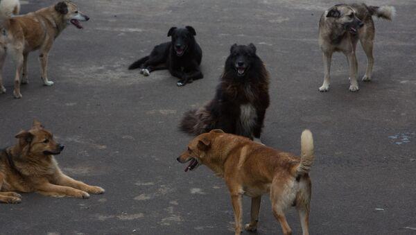 Собаки в приюте для бездомных животных, фото из архива - Sputnik Азербайджан