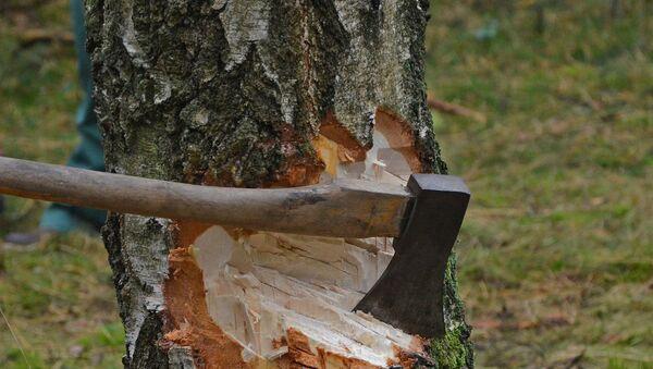 Вырубка деревьев, архивное фото - Sputnik Азербайджан